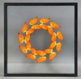 Cadre Papillons Orange