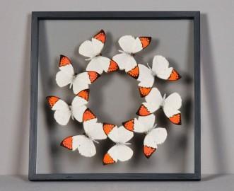 Orange & White Butterflies Frame