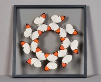 Orange & White Butterflies Frame