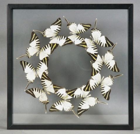 Cadre Papillons Patysa