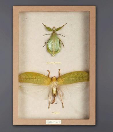 Cadre insectes vert jade - 2