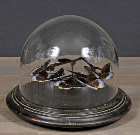 """Demie-sphère """"Ronde de Papillons"""""""