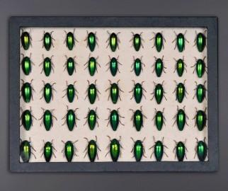 Boite Collectionneur d'Insectes