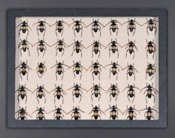 Boite Collection Insectes, Carnet de Voyages