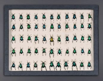 Boite Collection Insectes