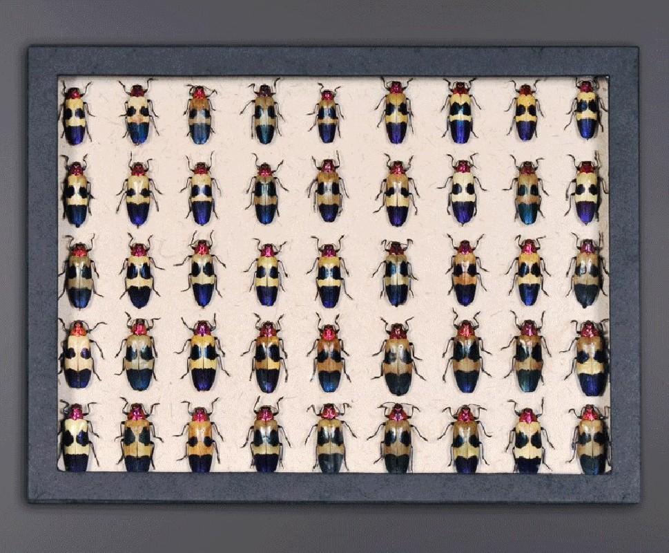 Boite de collectionneur insectes carnet de voyages xix collectionneurs c - Collectionneur de boite ...