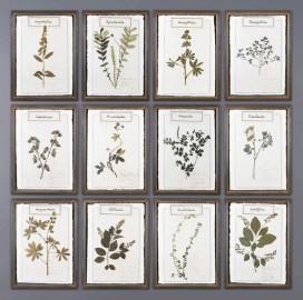 Herbs Frames A - Set of 12