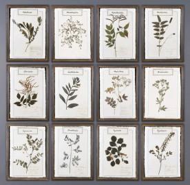 Herbs Frames B - Set of 12