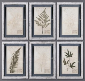 6 cadres herbiers