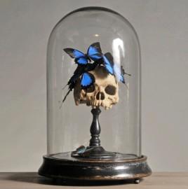 Globe Nature Morte & Papillons - Vanité
