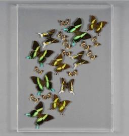 "Cadre Papillons ""Envolée Verte"""