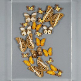 "Cadre Papillons ""Envolée Or"" - Brown Caligo"