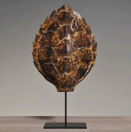 Carapace de Tortue - Reproduction