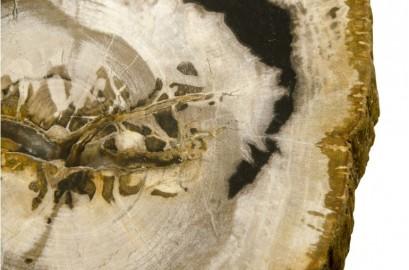 Table basse en bois fossilisé et métal