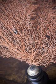 Gorgone Rouge sur socle