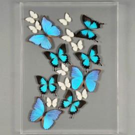 """Cadre Papillons """"Envolée Bleue"""", sous acrylique"""