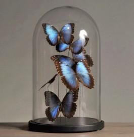 Globe papillons Morpho bleus