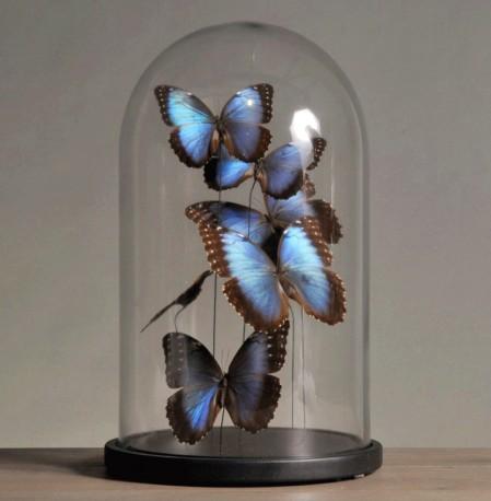 Globe papillons bleus