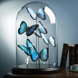 Globe 6 papillons bleus Morpho Peleides