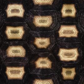 Papier Peint ECAILLE DE TORTUE, 1000x50cm