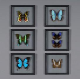 6 Papillons - Série