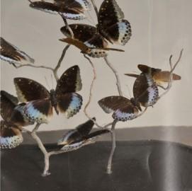 Globe Naturaliste Ovale - Papillons Lexias