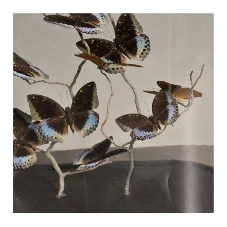 Globe Oval Papillons Lexias