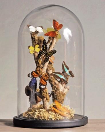 Globe Naturaliste - Papillons Multicolores