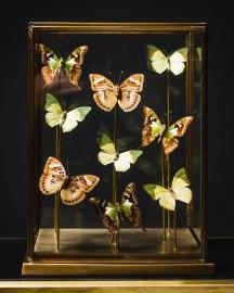 Soft Green Butterflies, Brass Diplay