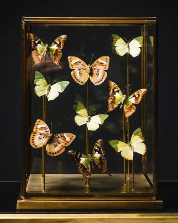 Vitrine 9 Papillons Vert Tendre