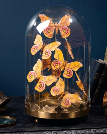 Globe de 8 papillons Antherina Suraka