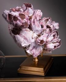Coquillage Violet (Balanes) - Socle Laiton