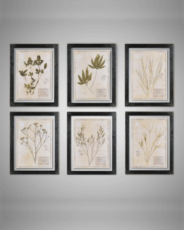 Set de 6 cadres herbiers
