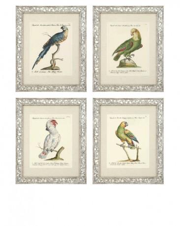 4 Italian Prints of Parrots