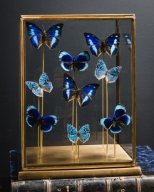 Blue Butterflies Square Brass Diplay