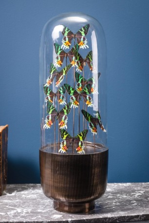 10 Butterflies URANIA RIPHEUS in Capsule Glass