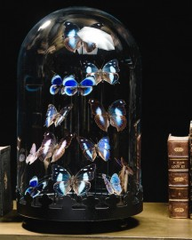13 Blue Butterflies Under Black Round Globe