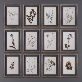 Cadres Herbiers Anciens - set de 12