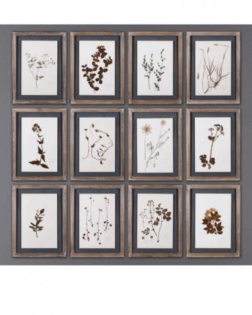 Cadres Herbiers- set de 12