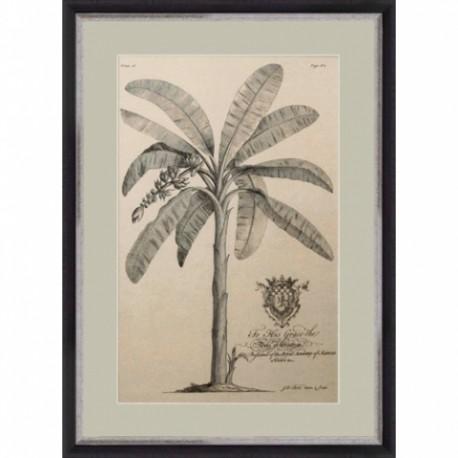 Gravures Palmiers, de G.Dionysius