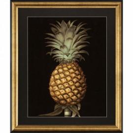 Grandes Gravures Botanique, Ananas - La Paire