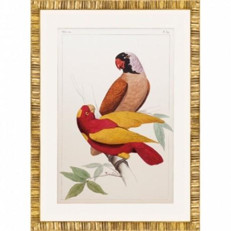 Quatre gravures perruches et perroquets