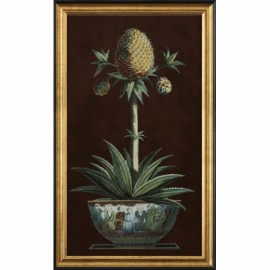 Gravure Archive ancienne, ananas