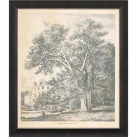 Engraving Oriental Plane Tree - Jacob Strutt
