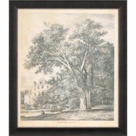 """Gravure d'arbre """"Oriental Plane"""" de Strutt"""