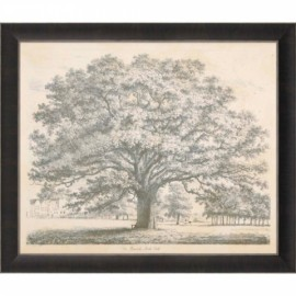 "Engraving ""The Bounds Park Oak"" by Jacob Strutt"