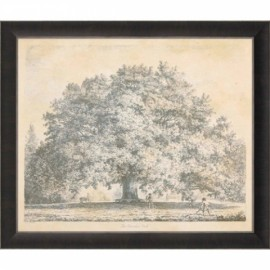 "Gravure de Strutt ""The Chandos Oak"""
