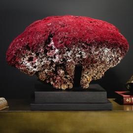 Red coral on black base, Unique !