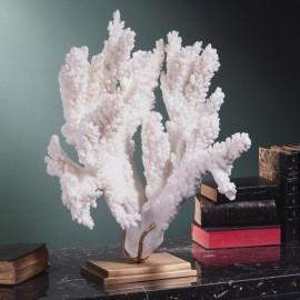 Corail blanc branch - ACROPORA FLORIDA