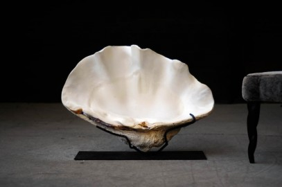 Tridacna Gigas Clam on Iron Stand.
